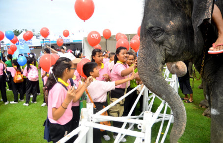 Thailand's flagship Anantara elephant polo event arrives to the riverside