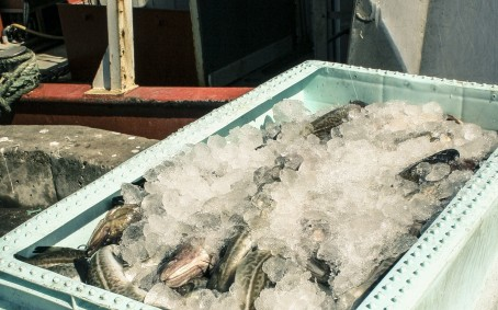 Datingside vurderinger med fisk våt