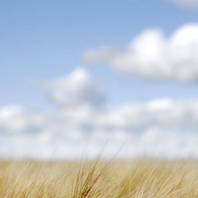 Altia sitoutuu tukemaan kestävää maataloutta ja parantamaan vedenkäyttöään
