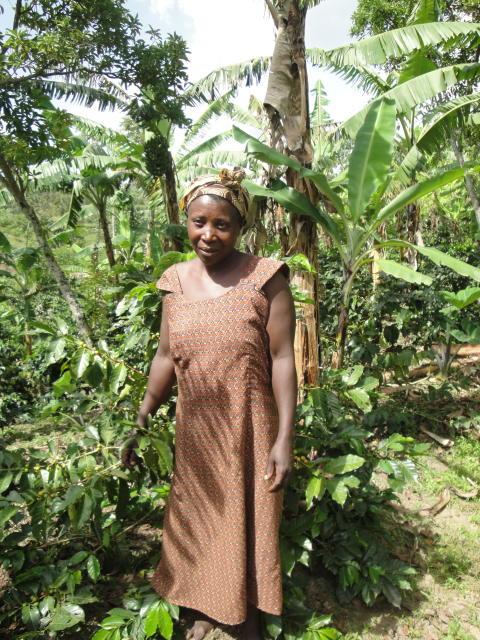 Att skapa hållbar tillväxt genom trädplantering!