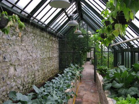 älskad odling i ditt växthus