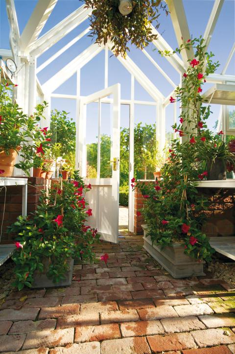 Välkommen in i mitt Hartley växthus!