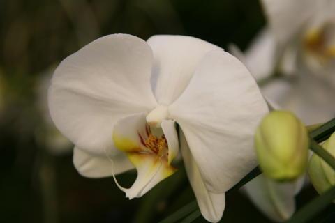 Orkidé 2009 - pressvisning