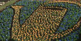 Botaniskas nyhetsbrev för maj