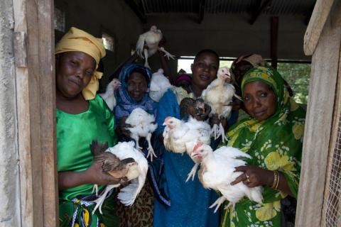 Ge kycklingar från ActionAid i påskägget!