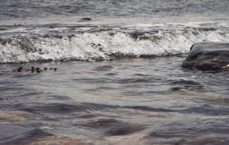 HaV ger två miljoner till syresättning av hav
