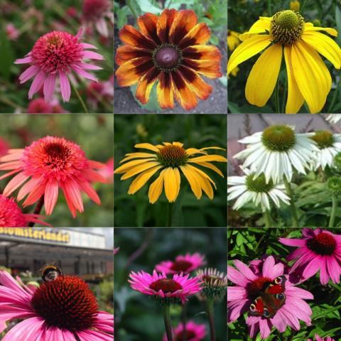 Blomsterlandet uppsala