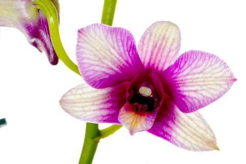 Nyfiken på Orkidéer?