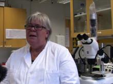 Legionella ökar på grund av felaktiga installationer