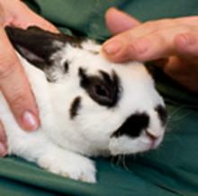 Nu finns det tre nya sidor för alla djurägare med djur som ska besöka oss för en operation