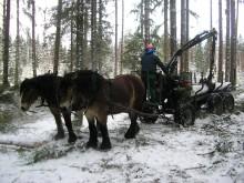 Miljövänliga hästkrafter tar plats i kommunerna