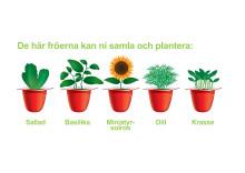 Möt våren med gröna fingrar! Odla goda kryddor och vackra blommor tillsammans med Danonino