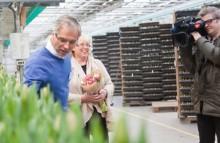 Klimatkompenserade tulpaner till miljöministern