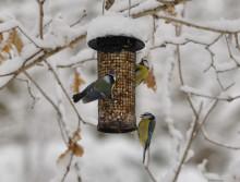 Sportlov med fågelspaning i Botaniska
