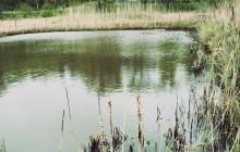 HaV vill lyfta fram viktiga naturvärden i sjön Åsnen och Mörrumsån