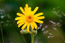   Rikare flora när hygget varit äng