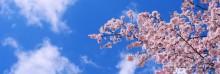 Uudet SAP S/4 HANA -yrityssovellukset nyt myös pilviversiona