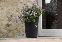Nyhet från Blomsterlandet! Ecopot®, miljövänlig kruka för trädgården.