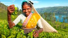 Nyhet: Rundreise Sri Lanka; Supertilbud på langtidsferie; Visste du dette om Transilvania; På tide å tenke jul....