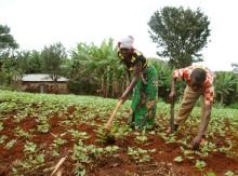 Getter och odling ger nytt hopp för familjer i DR Kongo