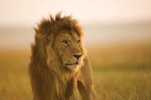 Safarieventyr; Ferie på skinner; Spennende motorsykkelturer; Zucca og New York; 50% på Middelhavscruise