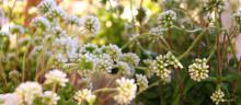 Vår florist lär dig inreda med blommor och växter
