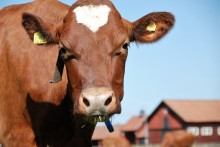 Konsumenterna kräver ett bibehållet starkt djurskydd!