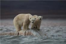WWF og Coca-Cola mobiliserer for Å BEVARE ARKTIS og ISBJØRNENE