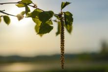 Allt du behöver veta om pollenallergi!