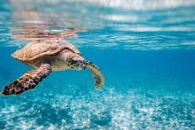 Øyhopping på Seychellene; Sommerferie på Mauritius; Rundreise Galapagos og Ecuador; 12 dagers cruise Scandinavia og Russland; Middelhavscruise til drømmepriser