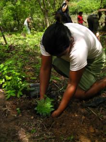 Vinn resa till Classic kaffes trädplantering i Nicaragua
