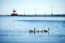 Lidköping förebygger framtida översvämningar