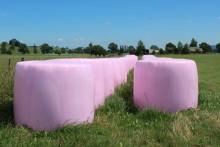 I sommar pryds svenska åkrar av rosa balar