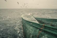 HaV föreslår ny modell för att få bättre bild av yrkesfiskets fångster