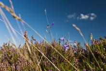 Natur erleben auf Sylt