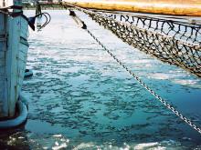 Sätt havsmiljön främst i EU:s fiskeripolitik