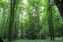 Ny bild av ädellövskogens utbredning i södra Sverige under 5000 år