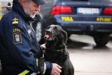 Hicka är Årets narkotikasökhund