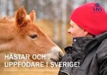 Framtidstro och kreativa tankar i Avelssverige: Ny rapport om avel och hästuppfödning