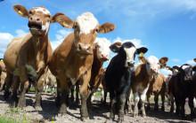 Pressinbjudan: Debatt om regeringens livsmedelsstrategi 1 juli i Almedalen