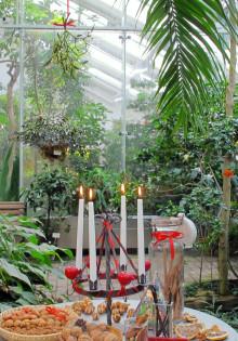Jul i växthuset – jorden runt bland julens växter