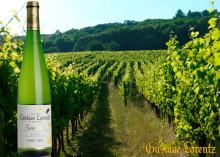 Nytt ekologiskt vin från Alsace - Evidence Pinot Gris från Domaine Gustave Lorentz