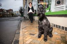Jiddra är Årets bragdhund 2015