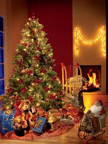 8 av 10 ska ha julgran i år – Oavgjort mellan rödgranen och kungsgranen