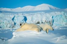 Solresor släpper extraplatser till populära Svalbard