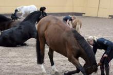 Hästgymnastik på Flyinge