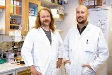 Blockerad prion kan lösa galna ko-sjukan