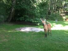 Ny kurs fokuserar på djurs beteende i djurparker