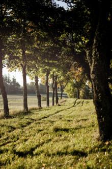 Tryffelmånad under november på Villa Aske