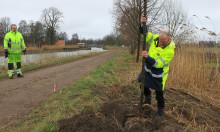 Trädfadder skänker 50 träd till Göta kanals trädallé